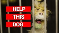 WTF: Dogs Are Being Experimented on at a University