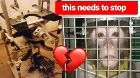 Cut Funding for Cruel Experiments on Animals