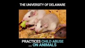 Drugs, Near Drowning, and Electric Shocks in 'Child Abuse' Experiments
