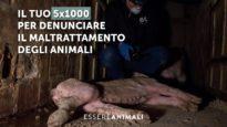Il tuo 5×1000 per denunciare il maltrattamento degli animali