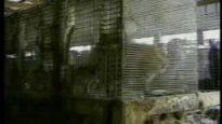 Stella McCartney's Fur Farm Investigation