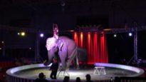 Abuse of Elephants at Garden Bros. Circus