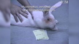 30 Years After PETA Exposed Cosmetics-Testing Lab, Here's How Far We've Come