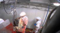 Abattoir made in France – les moutons (Alès)