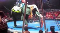 Apparently Arthritic Elephant Forced to Give Rides to Children