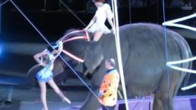 B-52s Hit Circus With Cease-and-Desist Letter for Using Songs During This Cruel Elephant Act