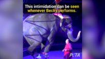 Becky - Twenty Years Later