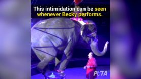 Becky – Twenty Years Later