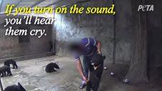 Circo – Insegnare ai cuccioli a stare in piedi