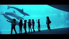 Gabbie d'acqua - Spot 2016 dell'acquario di Genova
