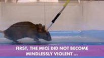 Il topo Killer