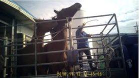 K-Cruelty: PETA Investigation Inside Korea's Largest Horse Slaughterhouse