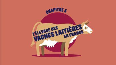 L214 EDUCATION / Les vaches et les produits laitiers