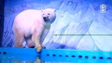 La disperazione dell'orso polare che vive in un centro commerc…