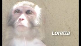 Loretta's Story: This Is Why Experiments on Primates Must End