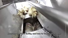 Pollo - Effetti collaterali