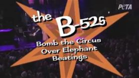 The B52s Know Circuses Are No 'Love Shack' for Elephants
