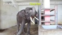 Animals Abused for Tourists' Cheap Photos and Entertainment