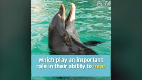 Dolphins Forced To Perform Cruel and Dangerous Tricks at SeaWorld