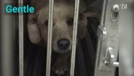 Heartbreaking Reasons Why Experimenters Test on Dogs