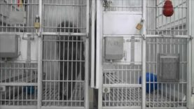 Isolation and Psychosis in a U.S. Laboratory
