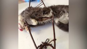 Traps Meant for Coyotes Are Killing Cats