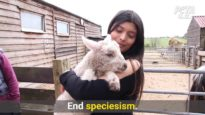 Why Care For One Animal And Harm Another?