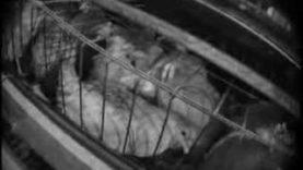 Egg Farm Undercover Investigation