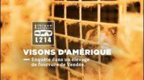Enquête dans un élevage de visons utilisés pour leur fourrure #BalanceTaFourrure