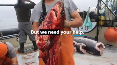 Nightmare at Sea: Animal Abuse in the Driftnet Fishing Industry