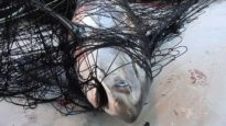 Our oceans aren't dying; they are being killed by the commercial fishing industry.