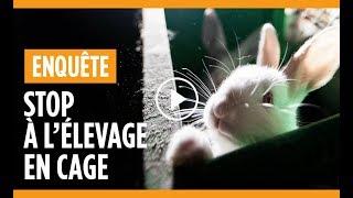 Enquête dans un élevage de lapins à Nueil-les-Aubiers (Deux-Sèvres)