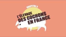 L214 EDUCATION / L'élevage des cochons en France