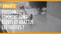 Poisson : comment sont élevées les truites en France ?