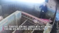 Animal Abusers Convicted | Animal Equality