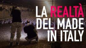 Animal Equality svela la realtà nascosta dall'industria alimentare