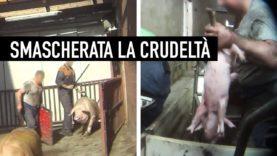 GRIDA NEL SILENZIO: nuova investigazione shock di Animal Equality