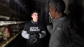 Il giornalista Piergiorgio Giacovazzo dentro l'allevamento degli orrori