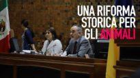 Messico: la crudeltà verso gli animali è un crimine!