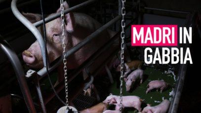 Nessuno merita una vita in gabbia | Animal Equality Italia