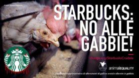 """NUOVA CAMPAGNA: Chiedi a Starbucks di dire """"no alle gabbie"""" in tutto il mondo!"""