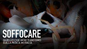 Soffocare - La lenta agonia dei pesci nei mari italiani