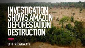 Animal Equality Investigation Shows Impact of Amazon Rainforest Deforestation