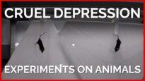 Cruel Depression Experiments on Animals