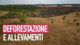 La deforestazione dell'Amazzonia è causata dall'industria della carne?