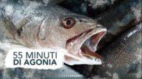 55 minuti di agonia: la terribile morte dei pesci.