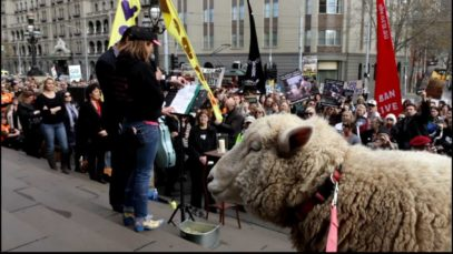Ban Live Export Rally – Melbourne