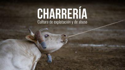 Charrería. Cultura de explotación y de abuso.