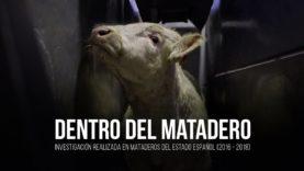 Dentro del matadero: investigación en mataderos del Estado español.