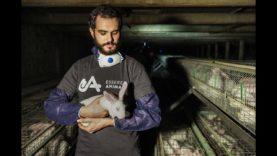 Flappy e Dixie, due conigli salvati da un allevamento intensivo
